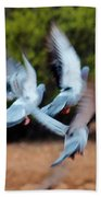 Birds In Flight 030515aa Beach Towel