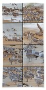 Birds Of Many Feathers Beach Towel