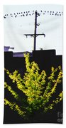Birds On A Wire In Cooper Young Beach Towel