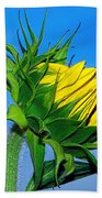 Birth Of A Sunflower By Kaye Menner Beach Towel