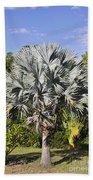 Bismarck Palm  Bismarckia Nobilis Beach Towel