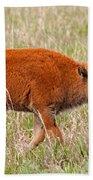 Bison Calf Grand Teton National Park Beach Towel