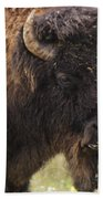 Bison From Yellowstone Beach Towel