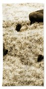 Bison Herd Beach Towel