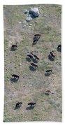 Bison Herd Beach Towel