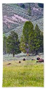 Bison Kicking Up Dust In The Meadow In Yellowstone National Park-wyoming  Beach Towel