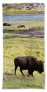 Bison Mother And Calf In Yellowstone National Park Beach Towel