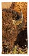 Bison Potrait At Teh Elk Ranch In Grand Teton National Park Beach Towel