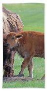 Bison With Young Calf Beach Towel