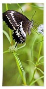 Black And White Butterfly Beach Towel