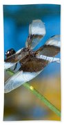 Black And White Dragonfly Beach Towel