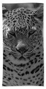 Black And White Leopard Portrait  Beach Towel