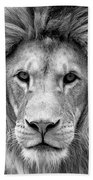 Black And White Portrait Of A Lion Beach Towel
