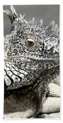 Black And White Saurian Animal Nature Iguana Beach Towel