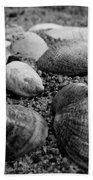 Black And White Seashells Beach Towel