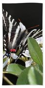 Black And White Swallowtail Square Beach Towel
