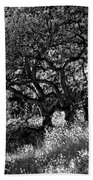 Black And White Trees Beach Towel