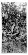 Black And White Uprooted Tree Beach Towel