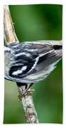 Black-and-white Warbler Mniotilta Varia Beach Towel