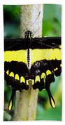 Black And Yellow Swallowtail Butterfly Beach Towel