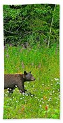 Black Bear Along Yellowhead Highway-bc Beach Towel
