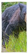 Black Bear Cub Near Road In Grand Teton National Park-wyoming Beach Towel