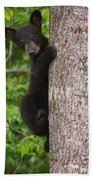 Black Bear Cub Beach Towel