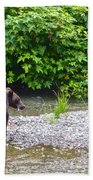 Black Bear Eating A Salmon In Fish Creek In Tongass National Forest-ak Beach Towel