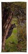 Black Bear In A Tree Beach Towel