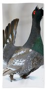 Black-billed Capercaillie Displaying Beach Towel