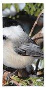 Black-capped Chickadee 9527 Beach Towel