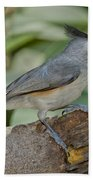 Black-crested Titmouse Beach Towel