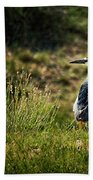 Black-crowned Night Heron At Carson Lake Wetlands Beach Towel