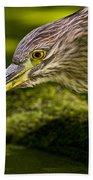 Black Crowned Night Heron Pictures 115 Beach Towel