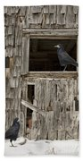 Black Crows At The Old Barn Beach Towel