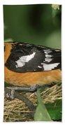 Black-headed Grosbeak Male Beach Towel