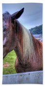 Black Horse At A Fence Beach Towel