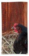 Black Laying Hen On Nest Art Prints Beach Towel