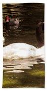 Black-necked Swan Beach Towel