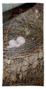 Black Phoebe Nest With Eggs Beach Towel