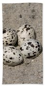 Black Skimmer Eggs Beach Towel