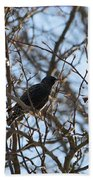 Black  Starling Beach Towel