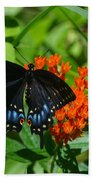 Black Swallow Tail On Beautiful Orange Wildlflower Beach Towel