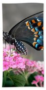 Black Swallowtail Butterfly Beach Towel