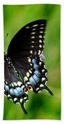 Black Swallowtail Butterfly In Garden Beach Towel