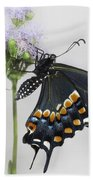 Black Swallowtail II Beach Sheet