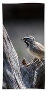 Black Throated Sparrow Beach Towel