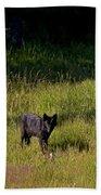 Black Wolf   7251 Beach Towel