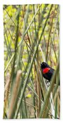 Blackbird In Reeds Beach Towel