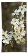 Blackthorn Or Sloe Blossom  Prunus Spinosa Beach Towel